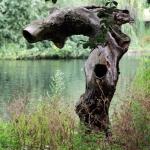 Londoner Baum